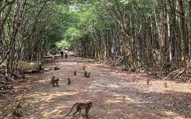 Đảo Khỉ - Cần Giờ