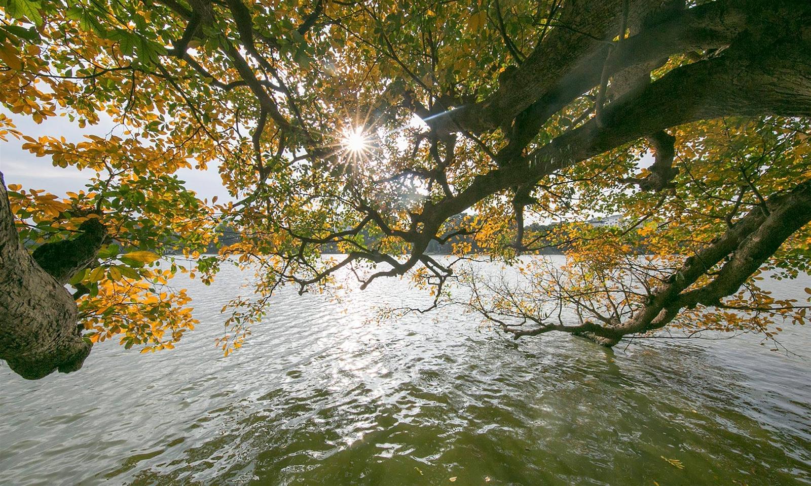 Lộc Vừng sà xuống bóng nước Hồ Gươm. Ảnh: Fb Đinh Nhu Cam Tuynh