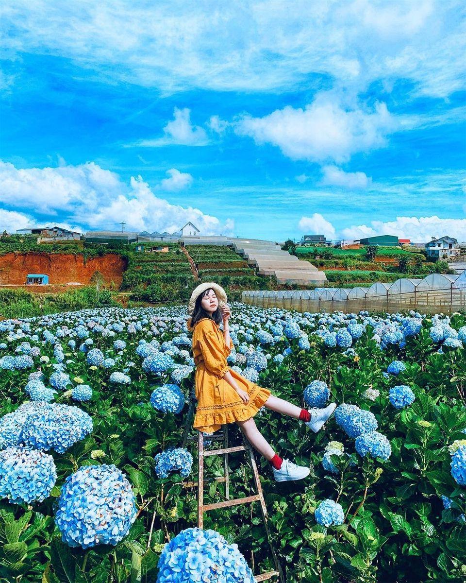 Image result for đà lạt vuwofn hoa cẩm tú cầu