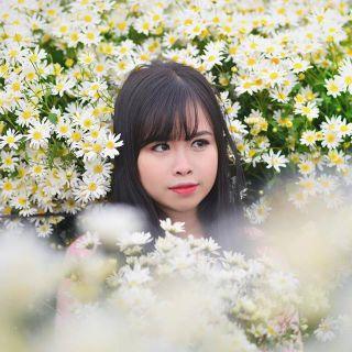 """[ĐN] Phát hiện khu vườn hoa đào và cúc họa mi ngay """"sát sườn"""" Đà Nẵng"""