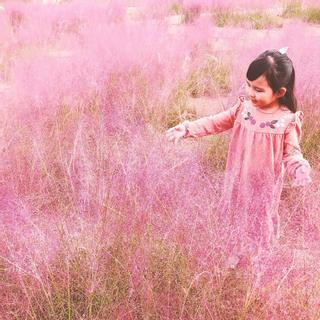 Đồi cỏ hồng ở Gia Lai đốn tim các bánh bèo đến chụp hình sống ảo