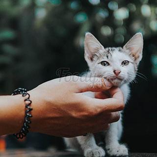 Ghé Nomad, quán cafe mèo cho dân tìm nơi làm việc