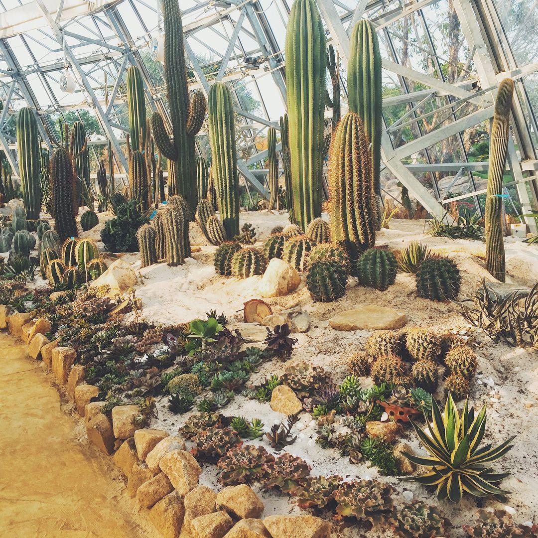 ... trong đó đặc biệt nhất chính là vườn Châu Phi nơi quy tụ 400 loài xương rồng cùng hơn 200 loại cây mọng nước đặc trưng của vùng sa mạc.