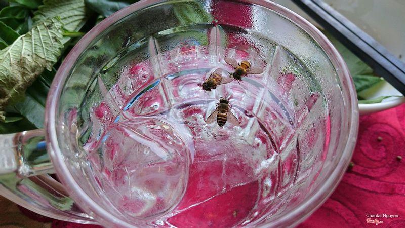 Ong ruồi ở đây thik uống 7up lắm nha.