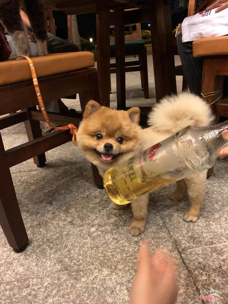 Bị mấy cô chú phục vụ dụ dỗ uống rượu nè