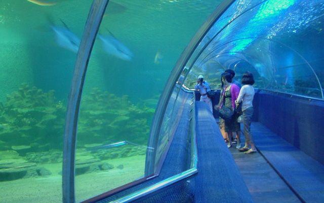 Thủy Cung - Vinpearl Resort Phú Quốc