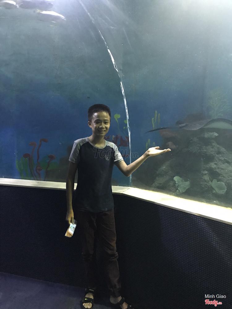 Thủy Cung - Vinpearl Resort Phú Quốc ở Phú Quốc
