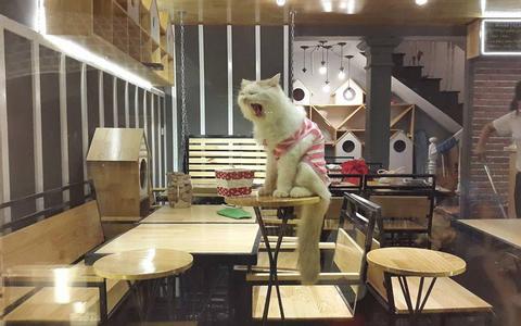 Các quán Cafe Mèo & Chó