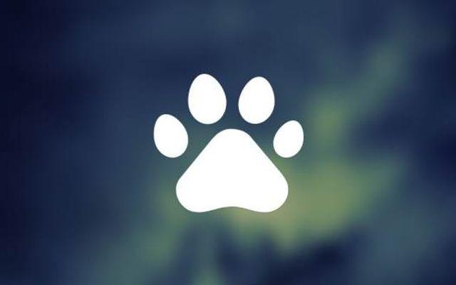 Xu Bông Pet Shop - Phụ Kiện Thú Cưng Đà Nẵng