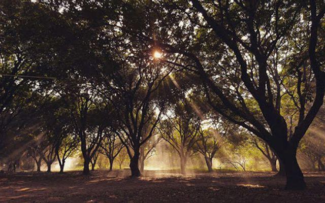Vườn Nhãn Long Biên
