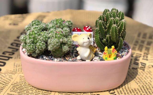Ino Garden - Chậu Cây Để Bàn