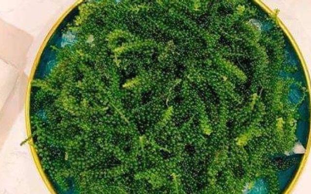 Rong Nho Nhật Super Food - Greeny Organic Farm