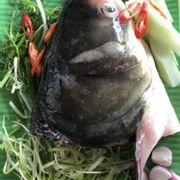 Lẩu đầu cá mè 2,5kg - 3,5kg