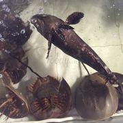 Sam biển và cá mú