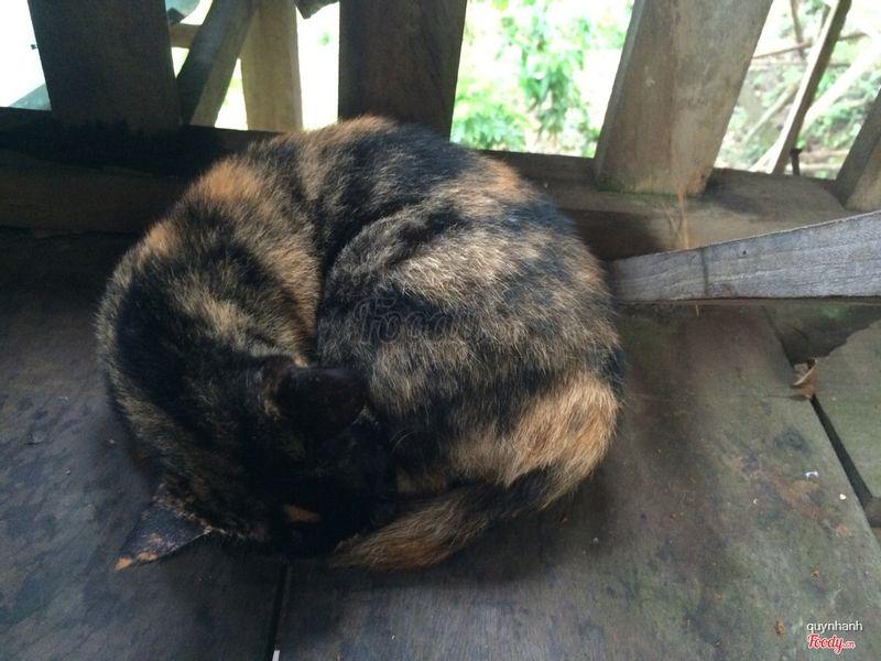 Mèo lười 😀
