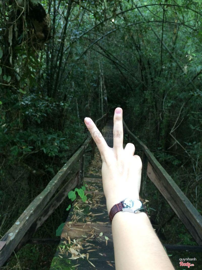 Đi bộ 5 cây để vào bầu sấu