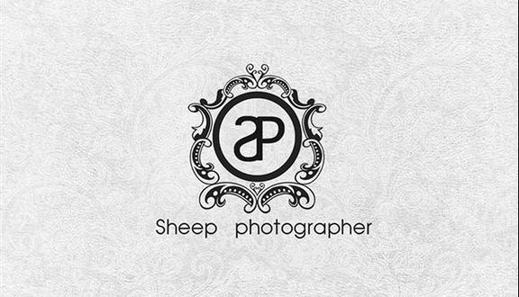 Sheep Photography - Tân Hải