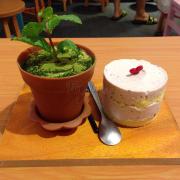 Tiramisu chậu cây + Cheese cake