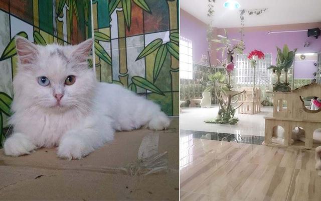 Lâu Đài Mèo Cafe - Milktea - Quốc Lộ 22