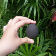 Trứng Bùn