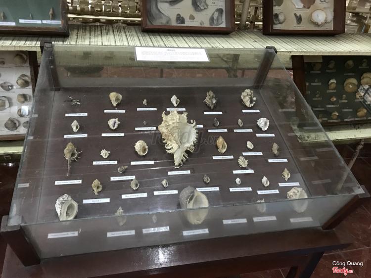 Viện Hải Dương Học Nha Trang ở Khánh Hoà