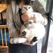 Bé mèo kawaii