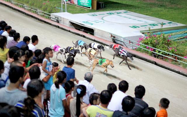 Đua Chó SVĐ Lam Sơn