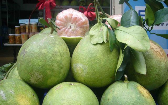 Dừa Bưởi Bến Tre - Xuân Đỉnh