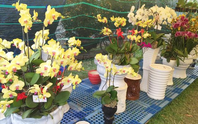 Shop Hoa Phong Lan Quỳnh Tiên