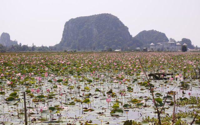 Hồ Sen Hòa Xuân