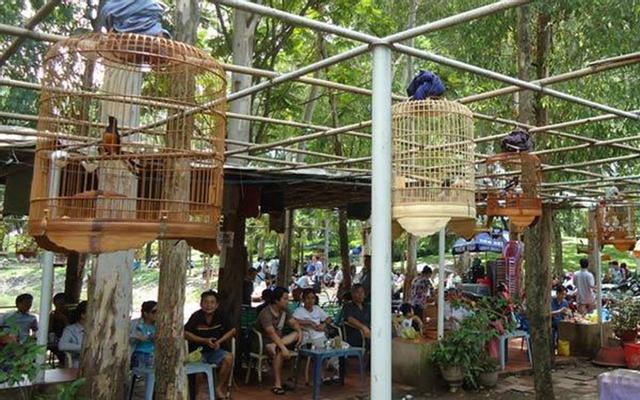 Chim Cảnh Cafe