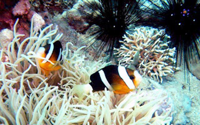 Khu Bảo Tồn Biển Hòn Mun - Nha Trang