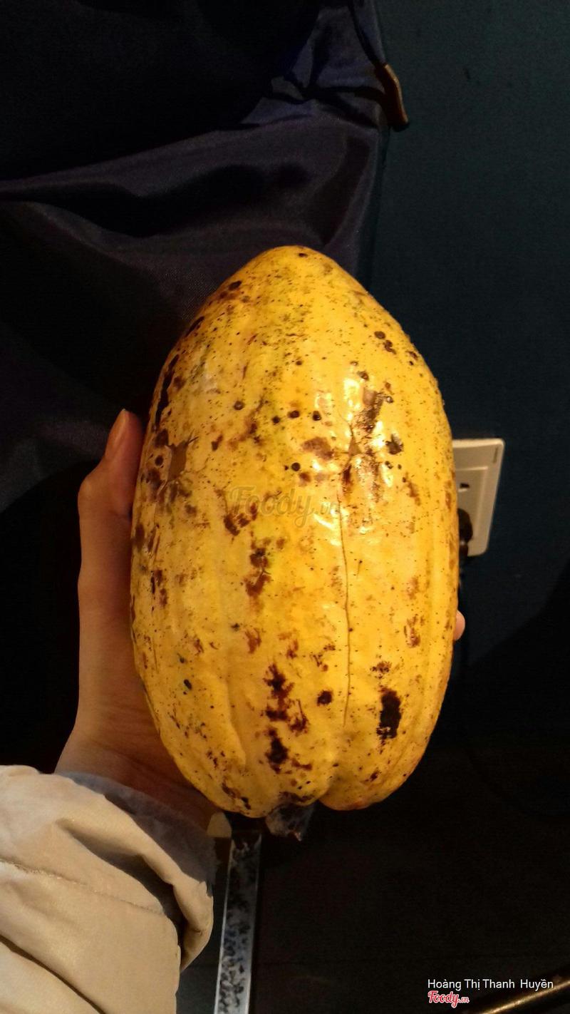 Quả cacao mẫu vật cho bạn nào muốn biết cacao tròn méo ra sao
