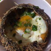 Nhum trứng