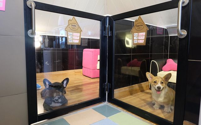 Bed and Pet-first - Dog Hotel