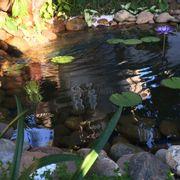 Hồ cá mini bên góc vườn