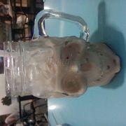 Hồng trà sữa 17k