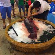 Cá 23kg