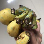 Mua chuối Laba vài hôm chuối đổ màu vàng ươm như nhuộm màu thêm những vết chấm xanh như bột màu là gì đây các bạn có biết chỉ với