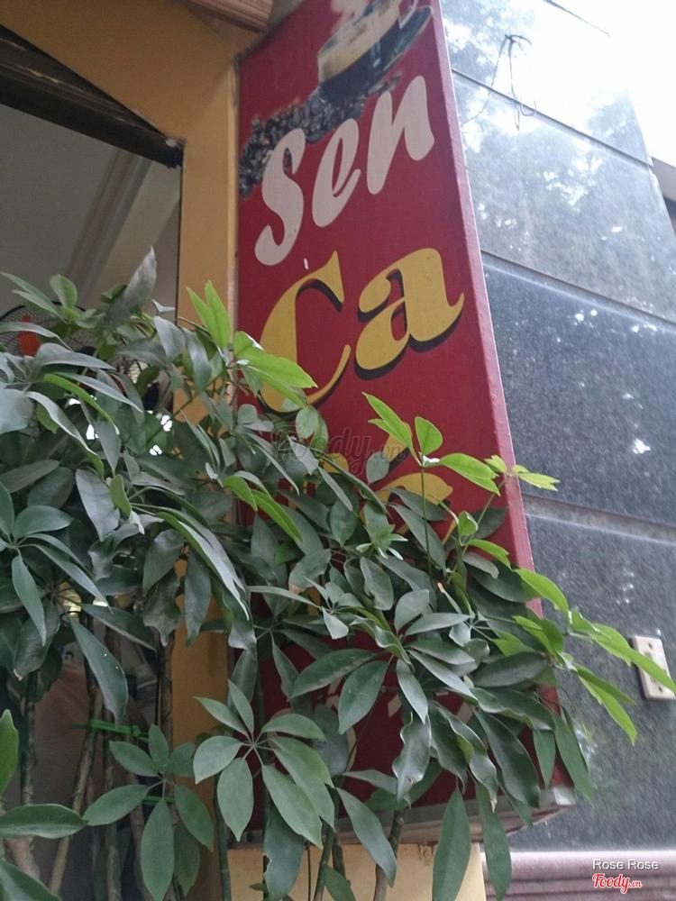Cafe Sen - Ngụy Như Kon Tum ở Hà Nội