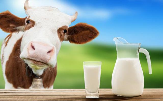 Hải Yến - Sữa Tươi Ba Vì