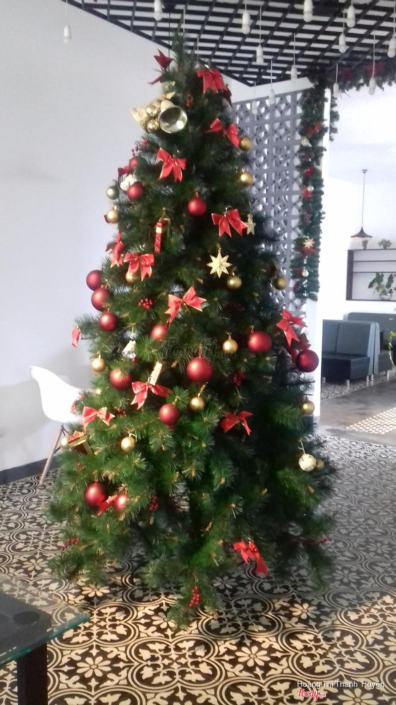 Cây Thông Noel 🌲⛄