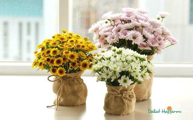 Dalat Hasfarm Flower Shop - Nguyễn Thiện Thuật