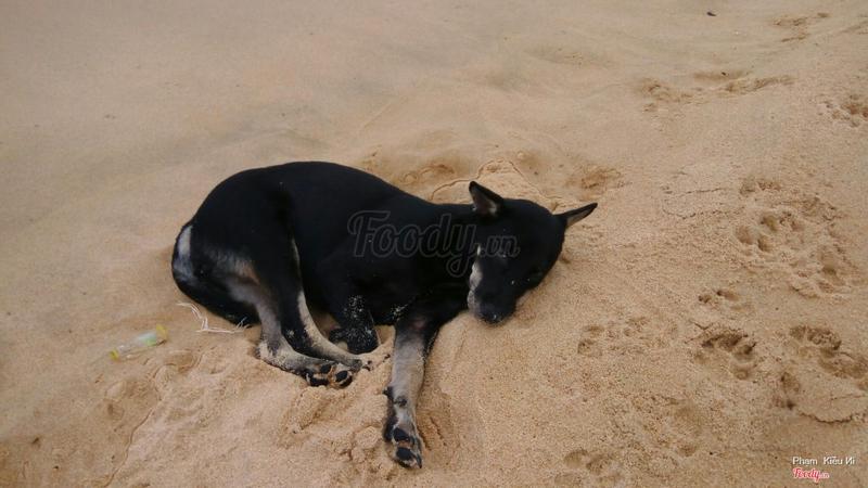 Chú chó ngủ say trên bãi cát