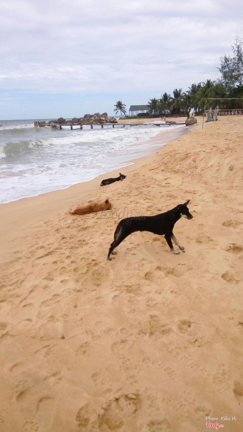 Rất nhiều em chó trên bãi biển