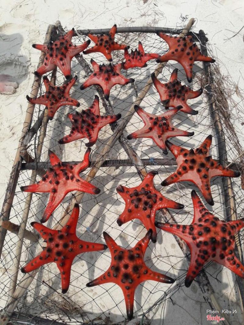 Những con sao biển