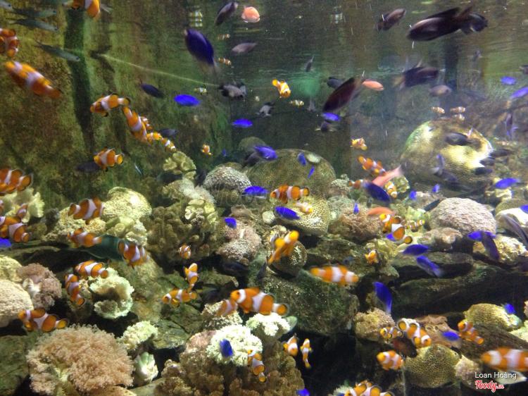 Vinpearl Aquarium - Times City ở Hà Nội