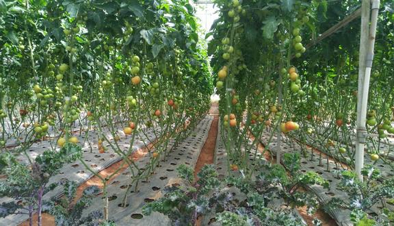 Giant Pumpkin Garden - Khu Vườn Bí Ngô Khổng Lồ