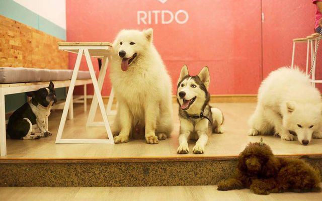 Ritdo - Pet Cafe & Spa