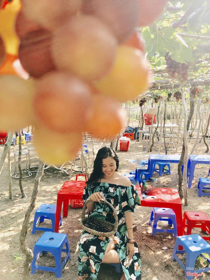 Vườn nho Ninh Thuận Tour Hợi Heo